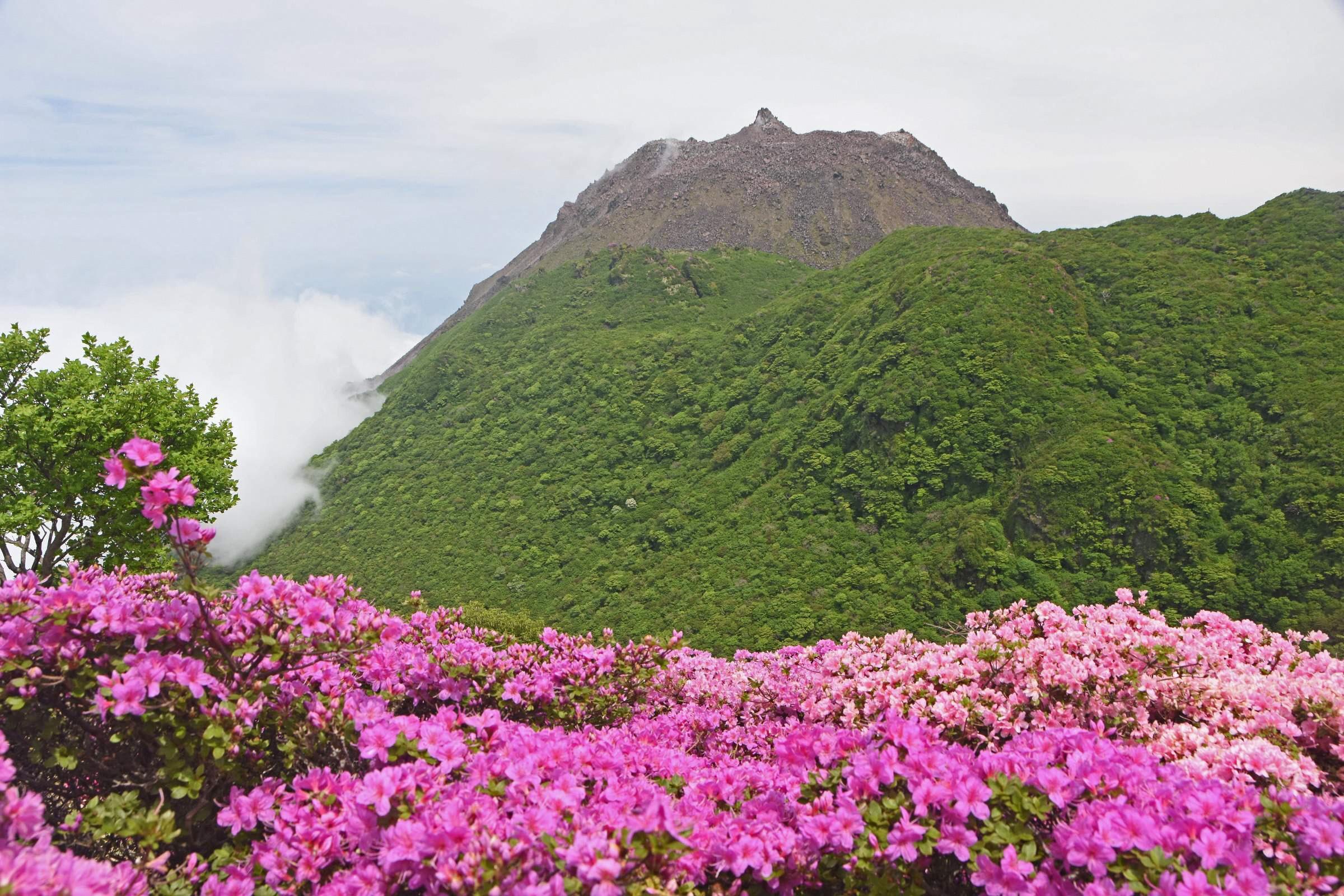 180519ミヤマキリシマ(国見岳)02